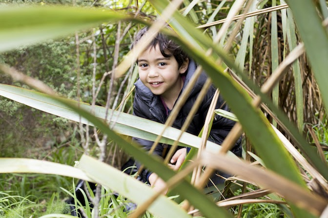 A child playing in the harakeke, flax.